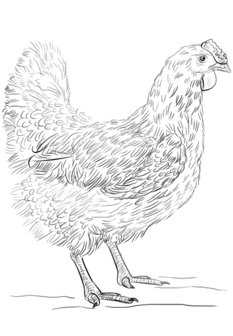Hen coloring page from Chicken