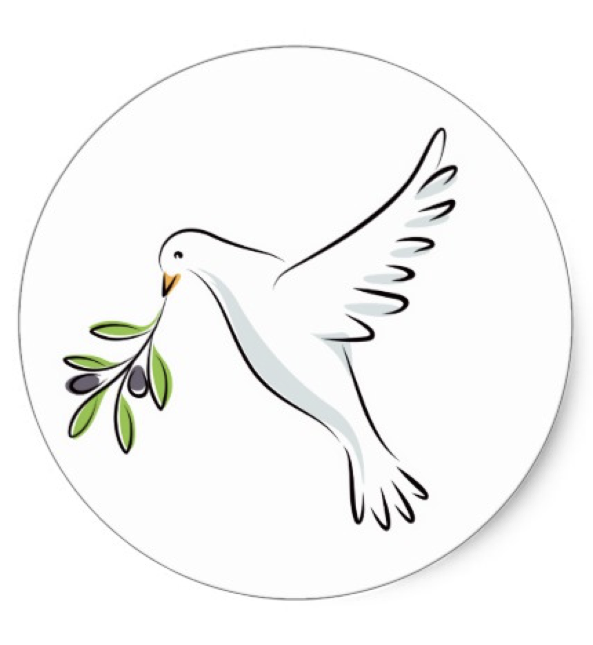 White Peace Dove With Olive Branch Classic Round Sticker Zazzle Com In 2021 Dove With Olive Branch Peace Dove Dove Drawing