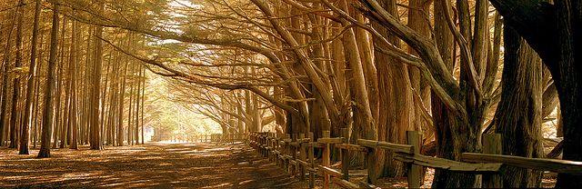 Fitzgerald Marine Reserve Moss Beach Moss Beach Marine Reserves Marine