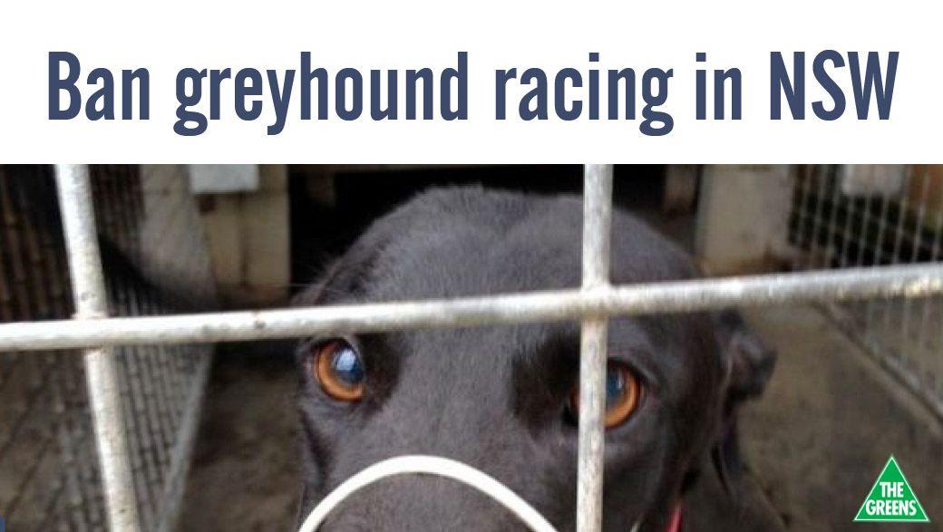 End the cruelty ban greyhound racing Greyhounds racing