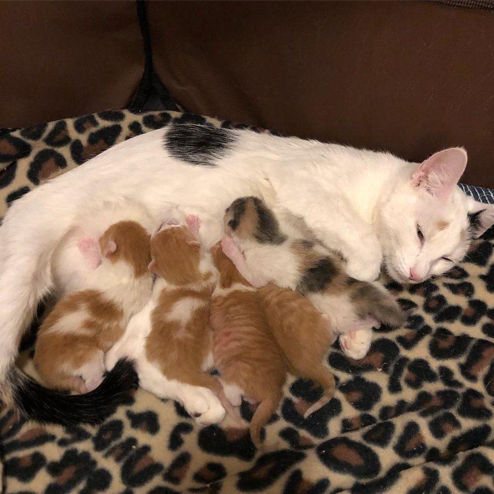 Pin By Jo Allen On Mama S Love Newborn Kittens