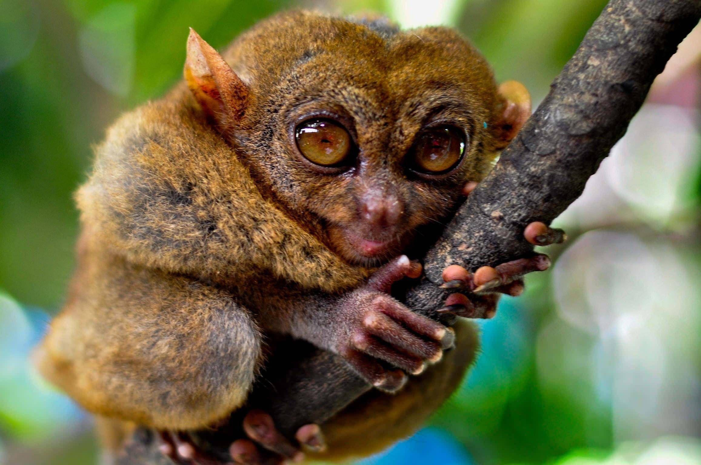 Картинки самых интересных животных в мире