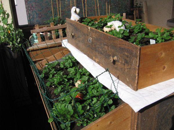 Jetzt Kann Der Sommer Endlich Kommen Murztal Erdbeeren Pflanzen Hochbeet Pflanzen