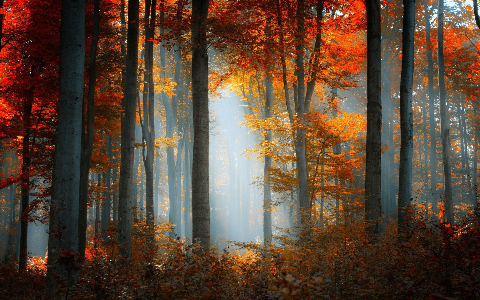 Dave Ruberto Autumn Fall Forest Nature Landscape Natureza Belas Paisagens Lindas Imagens