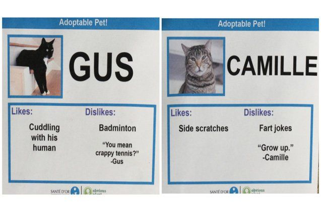 Hilarious Cat Adoption Profiles Will Make You Do A Spit Take Petguide Cat Adoption Cats Pet News