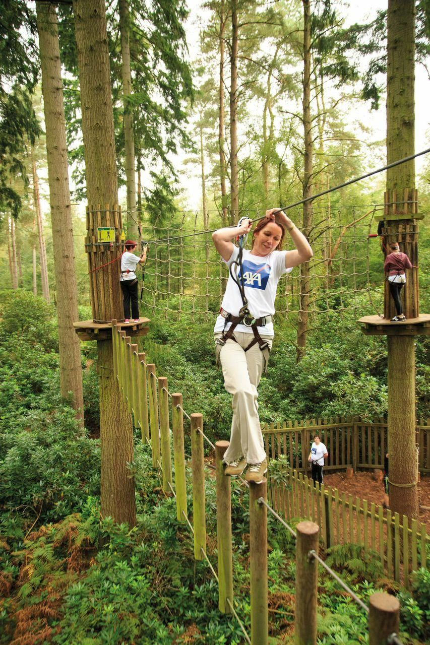 Go Ape To Open Treetop Adventure Course At The Blue Jay