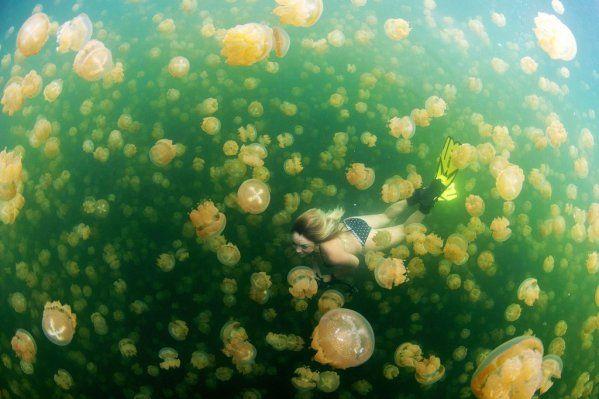 medusas en el mar