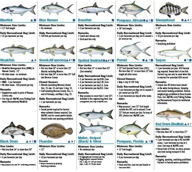 Coastal species 2016 florida saltwater fishing for Gulf fish species