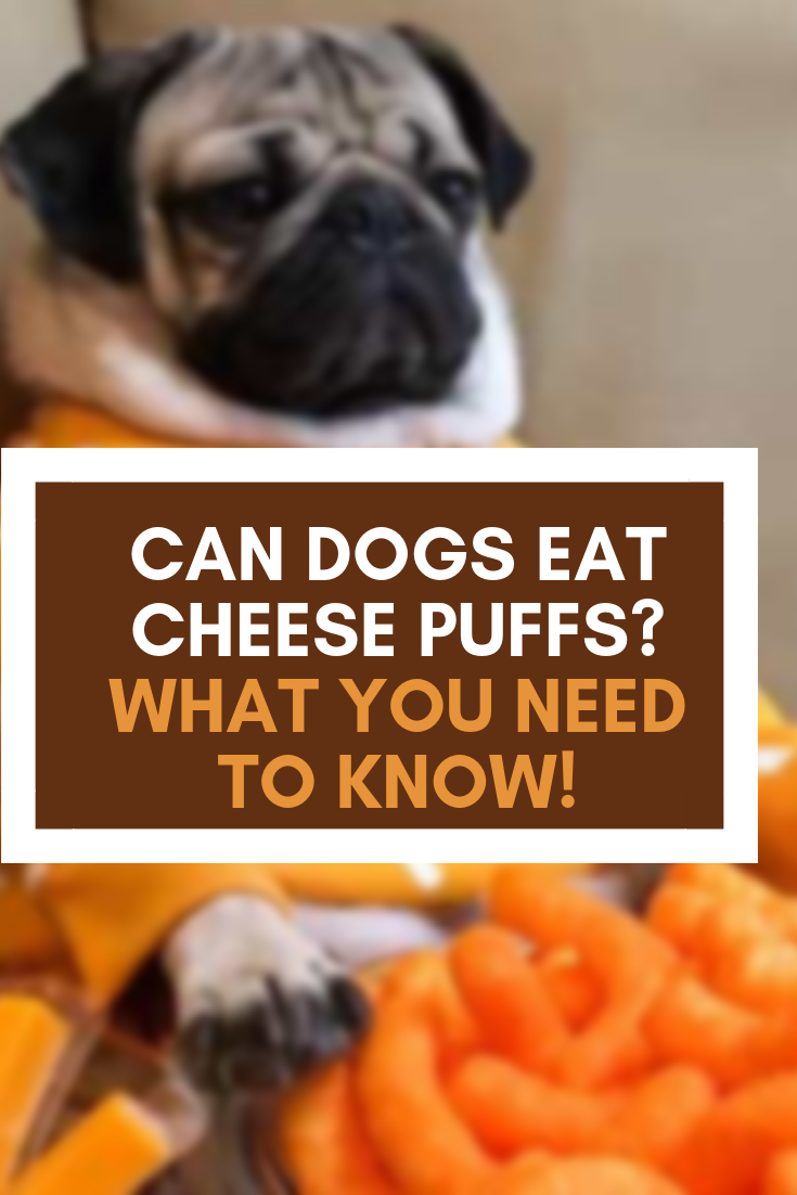 Can Dogs Eat Cheese Puffs? What You