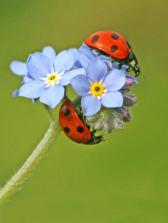 lady bugs bees flowers - photo #23