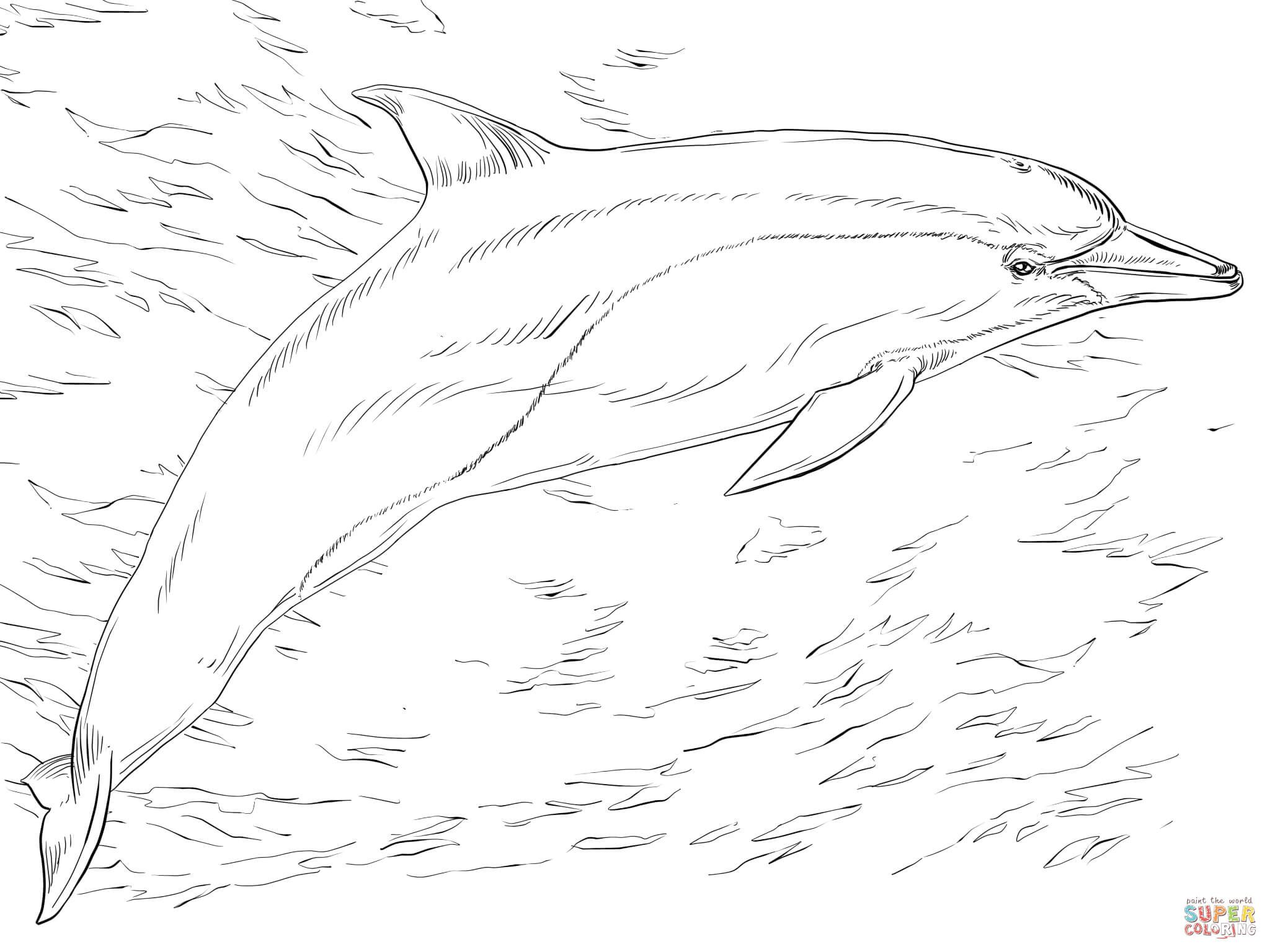 Hard Dolphin Coloring Pages Bing Images Dolphin Coloring Pages Common Dolphin Coloring Pages