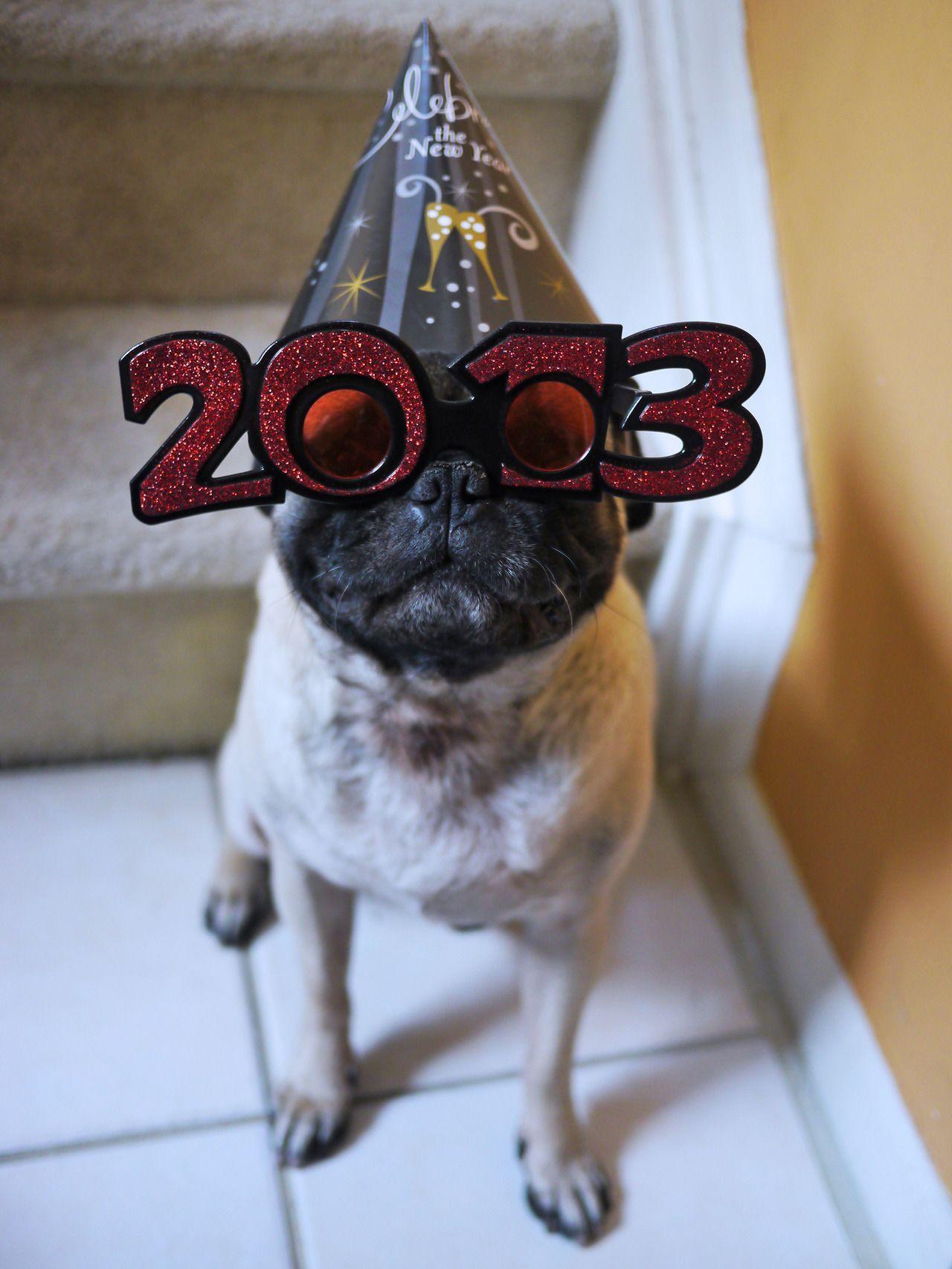 Happy New Year!! Cute pugs, Pugs, Pug love