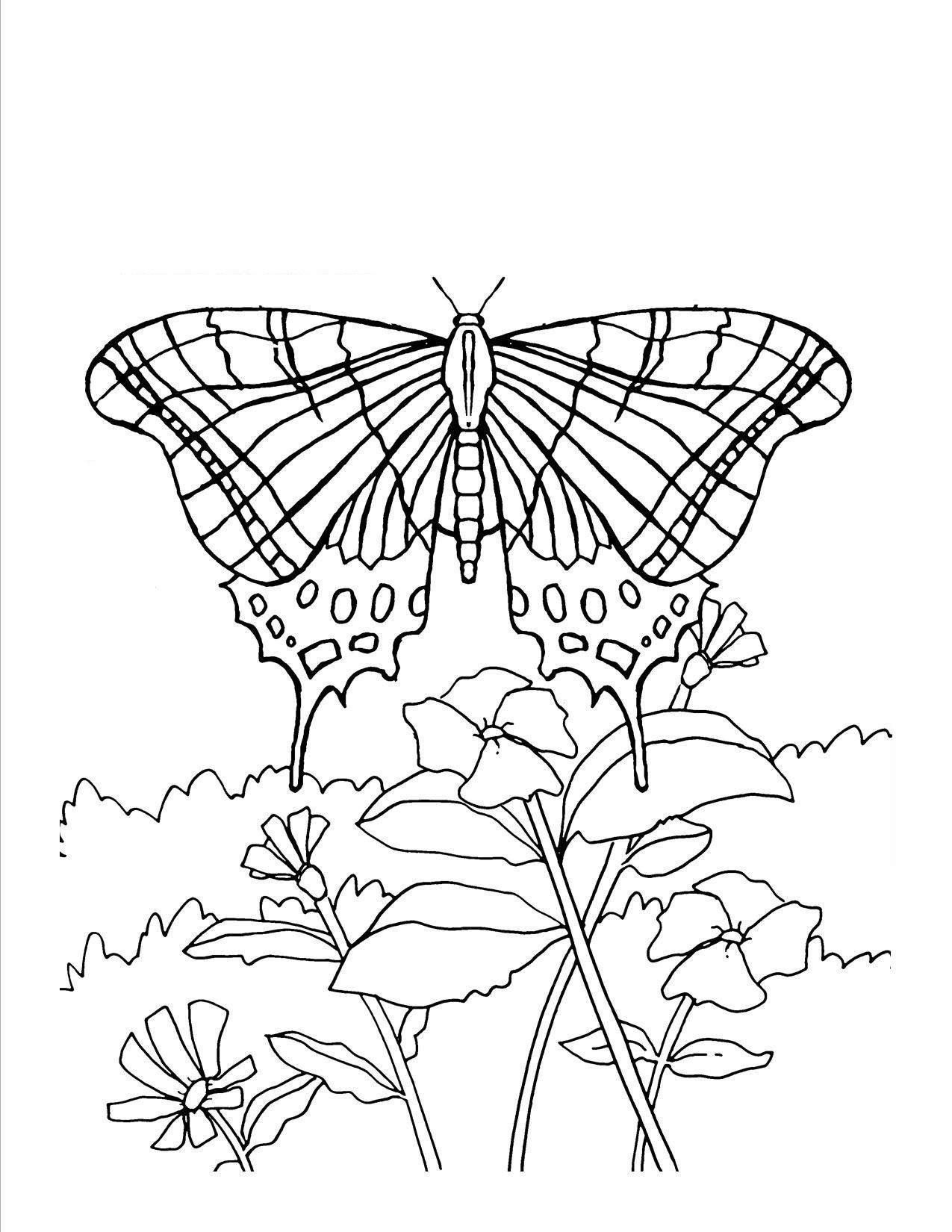 Butterfly Coloring Page For Adults Youngandtae Com Insect Coloring Pages Butterfly Coloring Page Bird Coloring Pages [ 1650 x 1275 Pixel ]