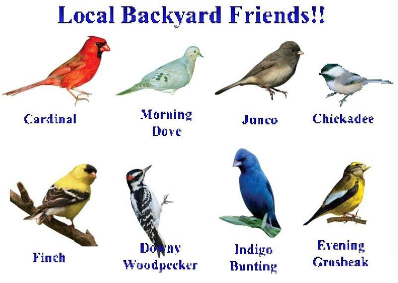 October 2011 World Birds Backyard Birds Common Birds