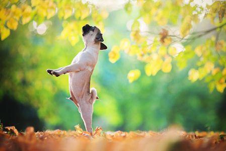 Ballerina? by Iza Łysoń