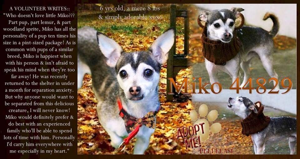Twitter New York and NE States Urgent Nyc dogs, York