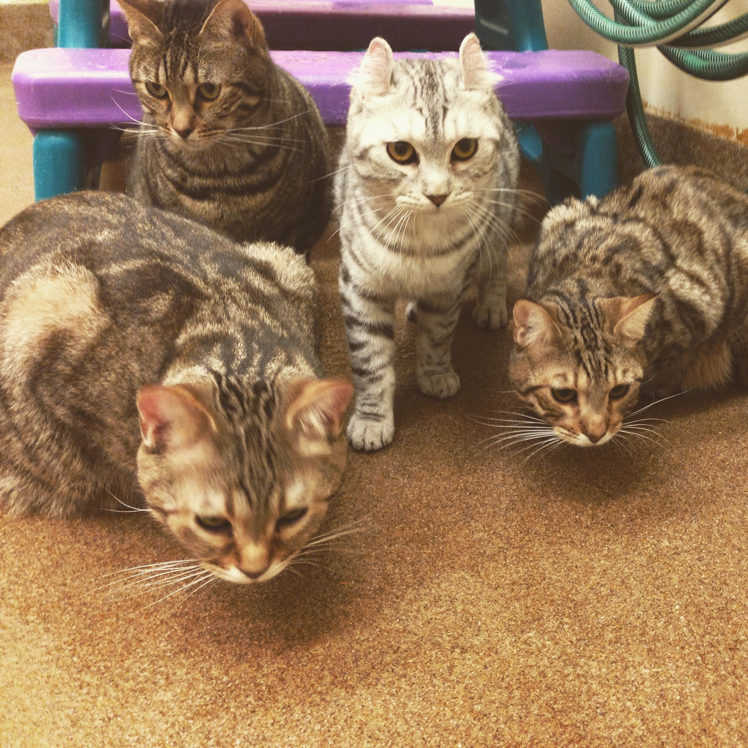 Group Shot Everyone Is Very Interested In Where That Toy Is Going Who Is Going To Get It First Labcats Catsforscience Cats Adorable Cats Kittens Cats Kittens