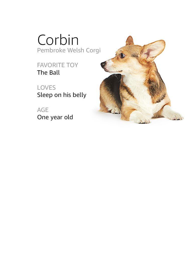 Meet The Dogs Of Amazon Corgi Names Corgi Dogs