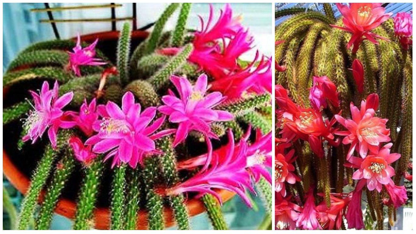 цветы кактусы фото и названия: 11 тыс изображений найдено ...