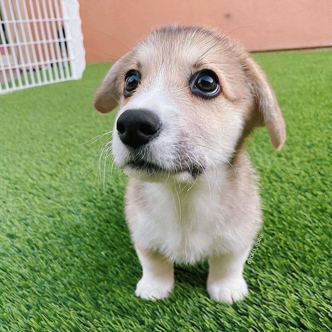 Dog Idea Dog Homes Dog And Baby Dog Projects Dog Cat Dog Ate Dog Home Ideas Home Dog Dog And Puppy Puppy Dog D In 2020 Smiling Dogs Famous Dogs Diy