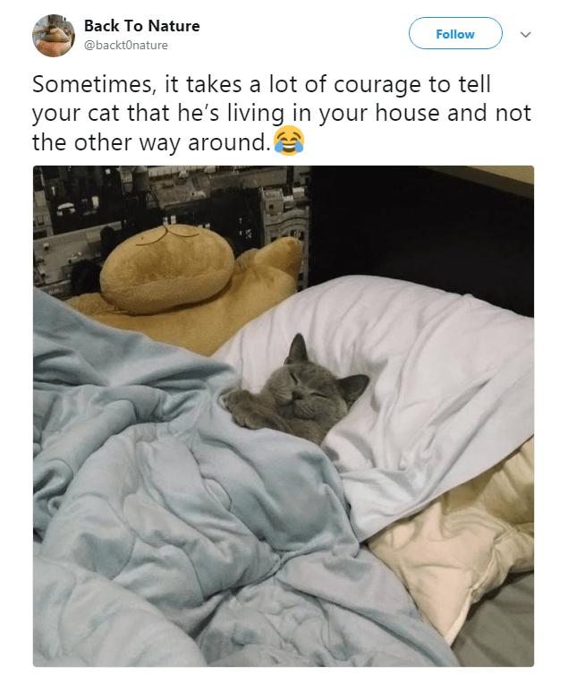 15 Animal Tweets That Made Us Laugh This Week August 27th 2018 15 Animal Tweets That Made Us Laugh Th In 2020 Funny Animal Pictures Funny Animal Memes Funny Cats