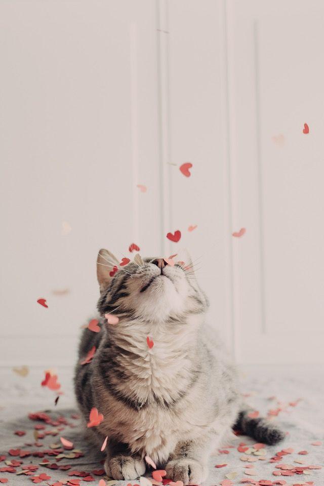 Photo of Vday |Love is in the air|: by Melanie DeFazio on @stellerstories