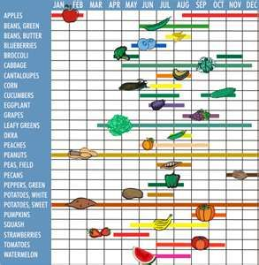 What food is in Season - fruits and vegetables