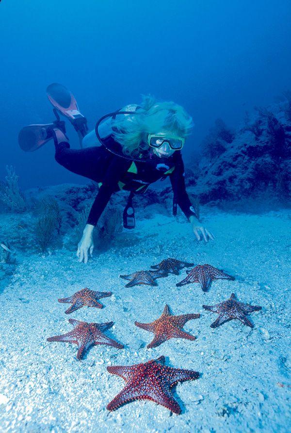 Scuba Diving Off Cabo San Lucas (https://www.facebook.com