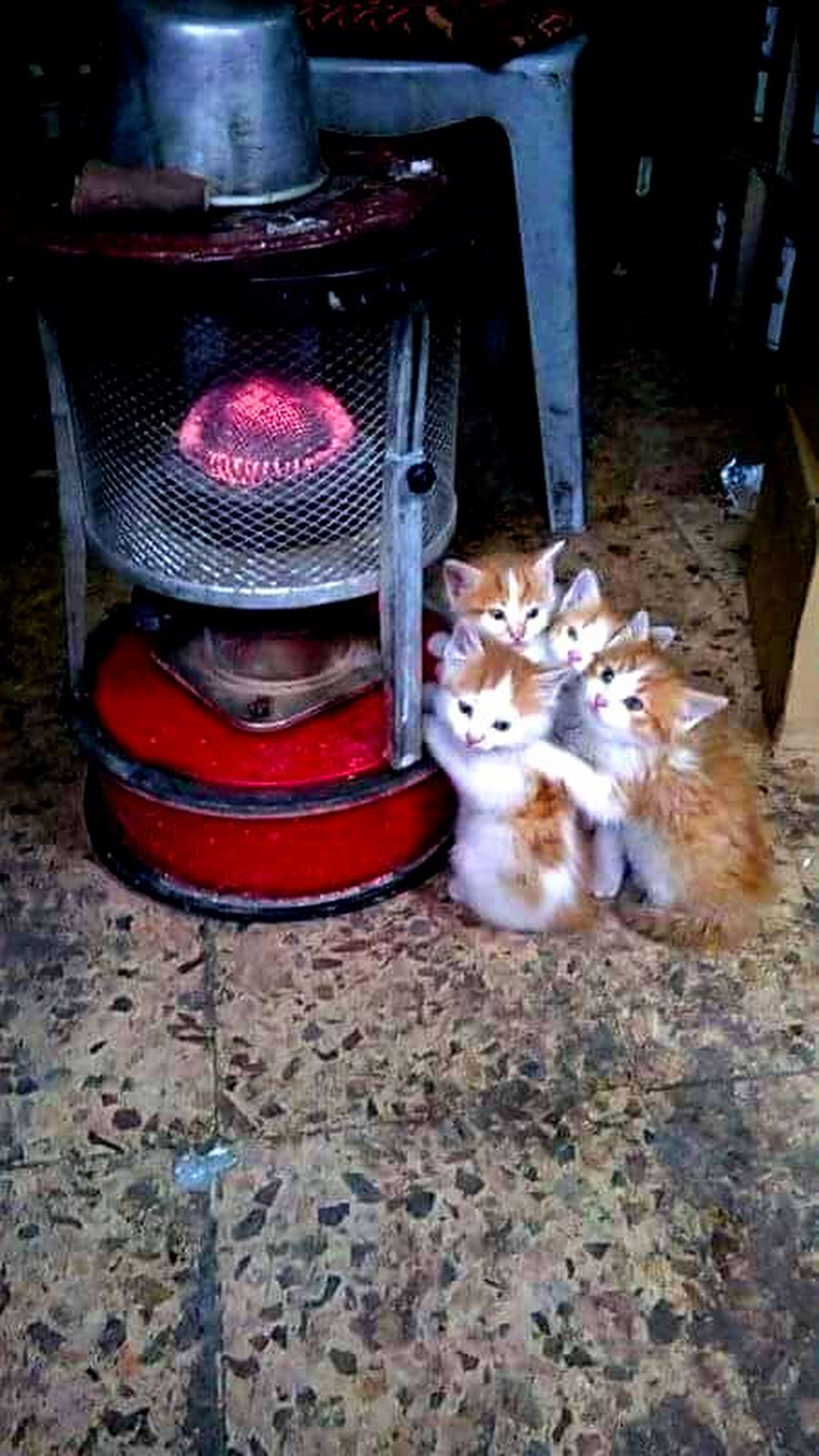 A Freezing Cold Day Pets Cats Kittens Cutest Dog Spay