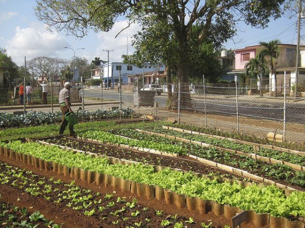 Image result for urban gardening cuba""