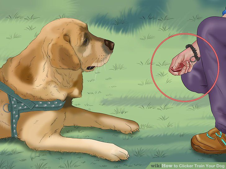 How To Train Dog Without Clickerhow To Train Dog Without