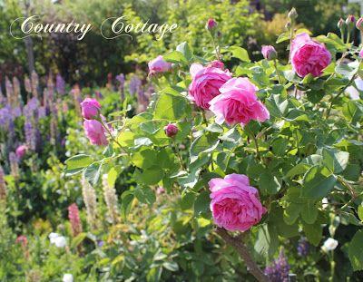 Shabby soul: Sunday garden - My country cottage garden