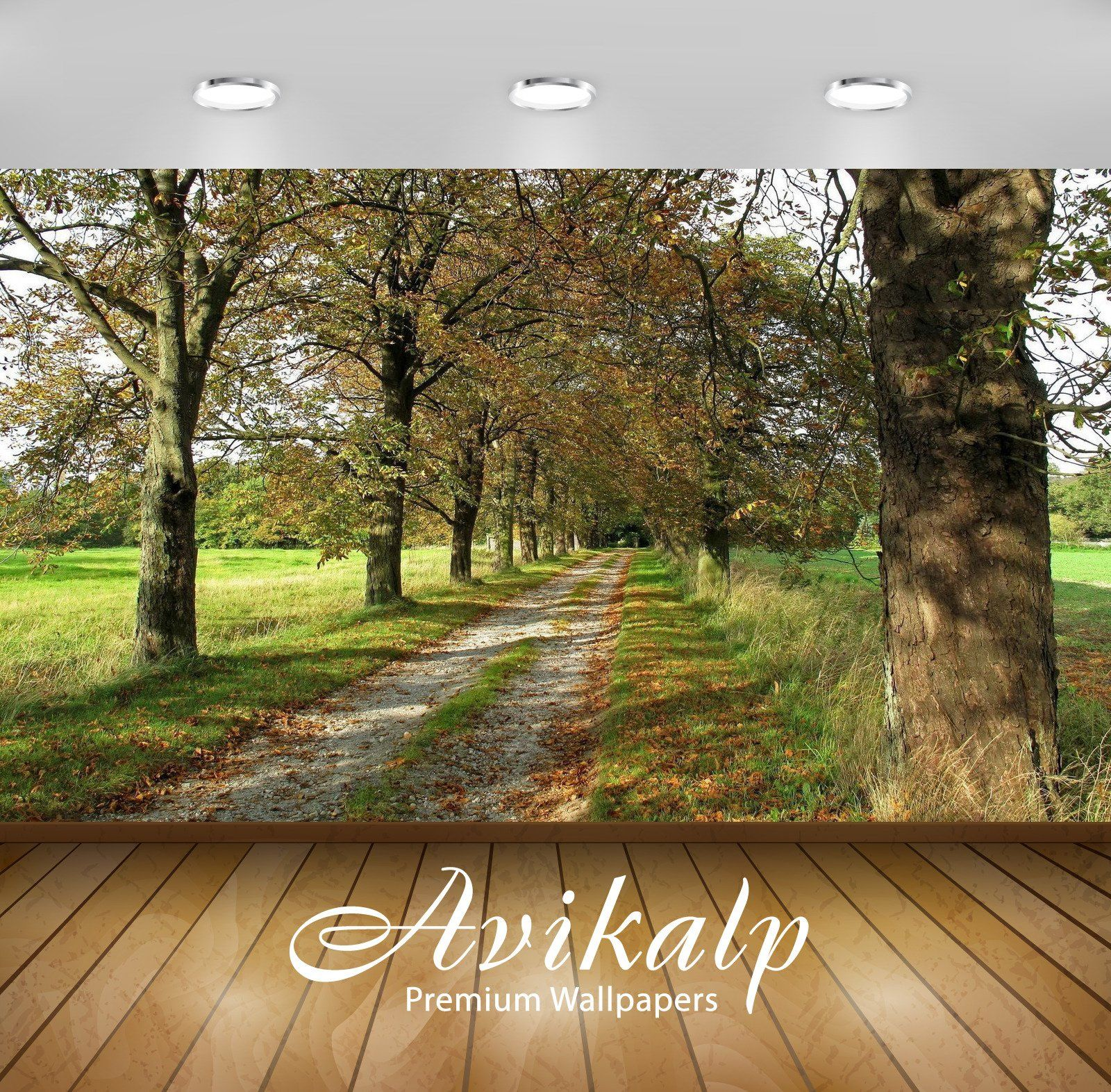 Avikalp Exclusive Awi5904 Path Through Tree Tunnel Nature Full Hd