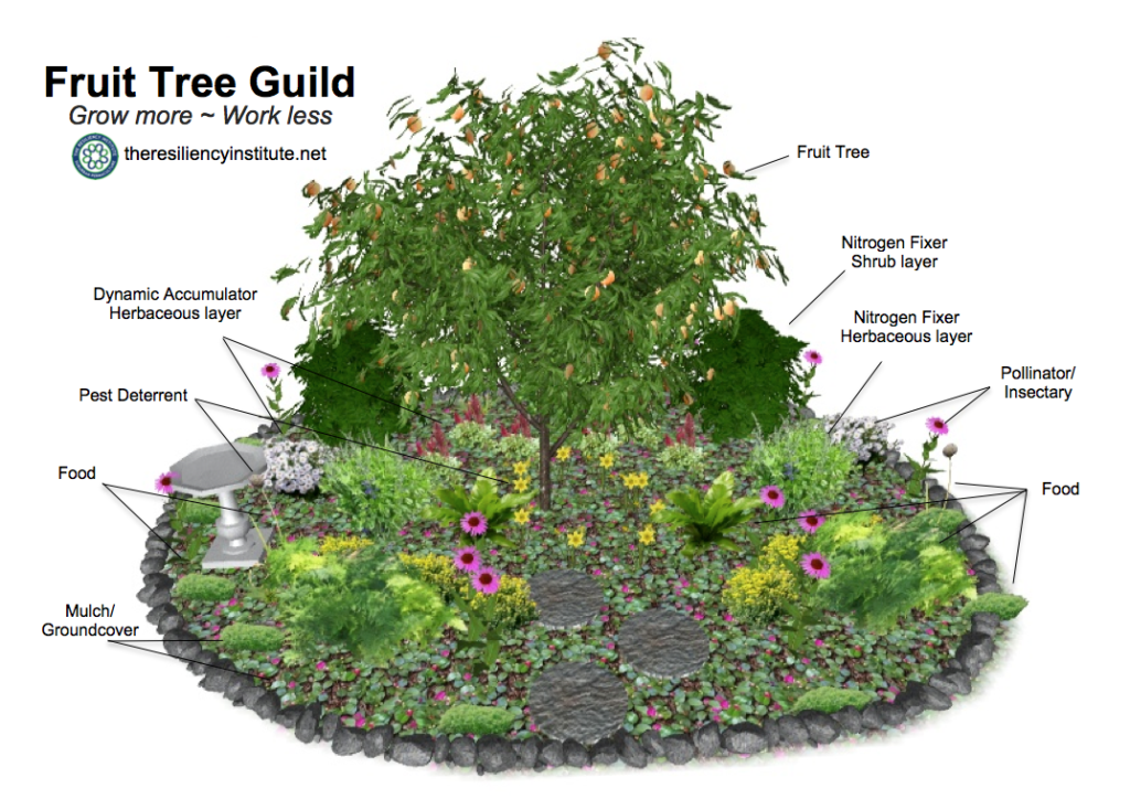 Growing A Fruit Tree Guild Greater Dupage Wild Ones Fruit Tree Garden Permaculture Gardening Food Forest Garden