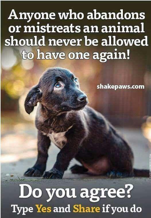 Pin By Kimberly Garcia On Sad Pinterest Animal Dog And Animal
