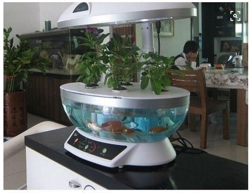 Tabletop Hydroponics Fish Tank Planter Aquaponics System With Grow Light Ag3416581 By Ff Design
