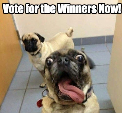 Vote Now and Decide Who Captioned the Pugs the Best!
