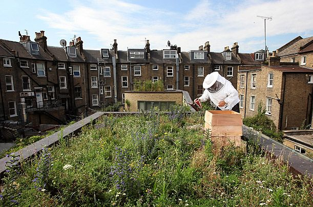 London, England  Beekeeper John Chapple tends to a beehive on an urban rooftop garden in Hackney    Read more: http://www.time.com/time/photogallery/0,29307,1913033,00.html#ixzz1tG4mO1KN