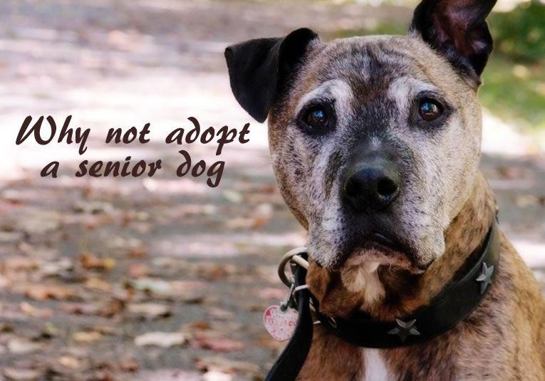 Why Not Adopt A Senior Dog? Naturaleza