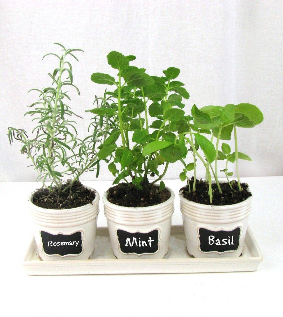 Lovely Kitchen Windowsill Herb Garden