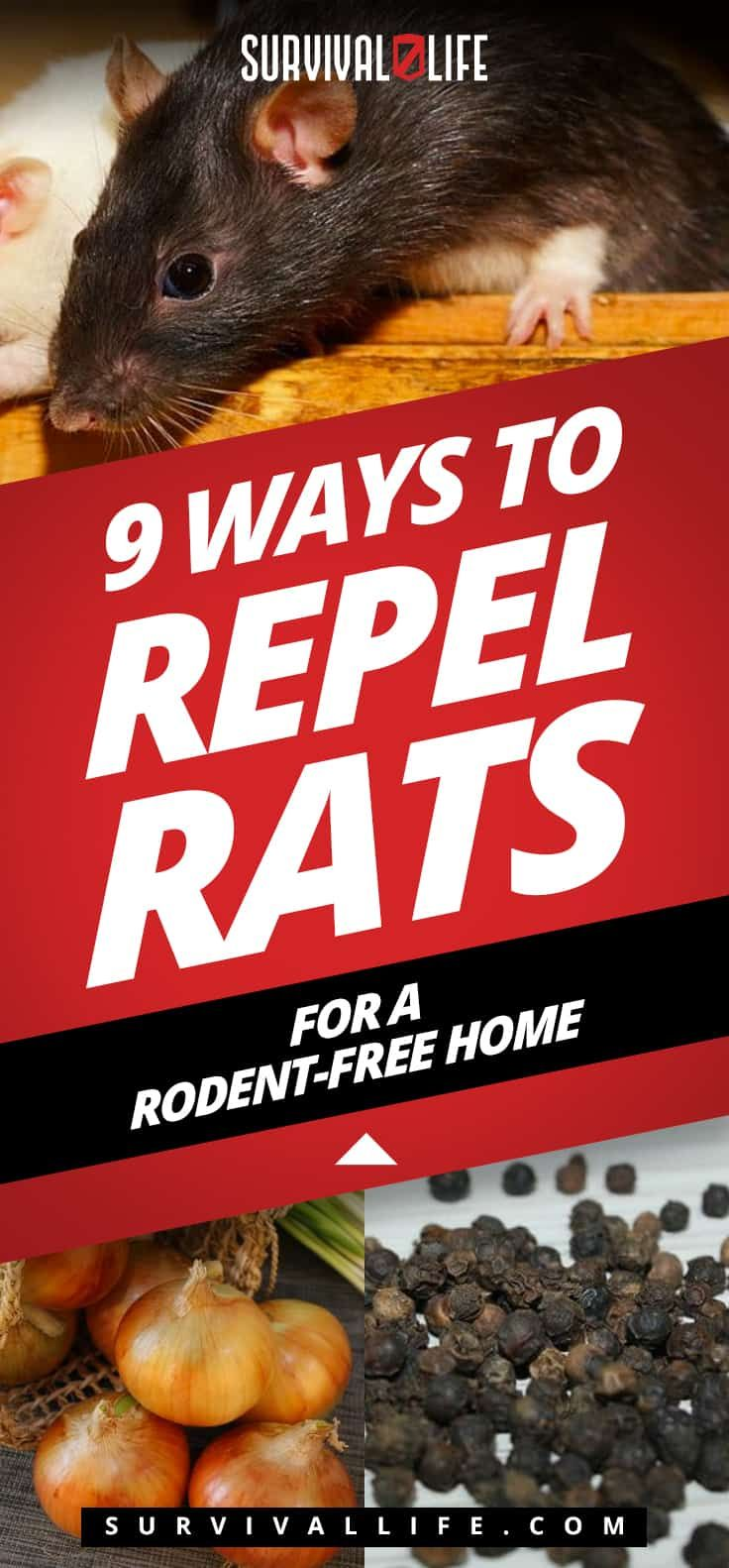 9 Ways To Repel Rats For A Rodent-Free Home | Rodents ...