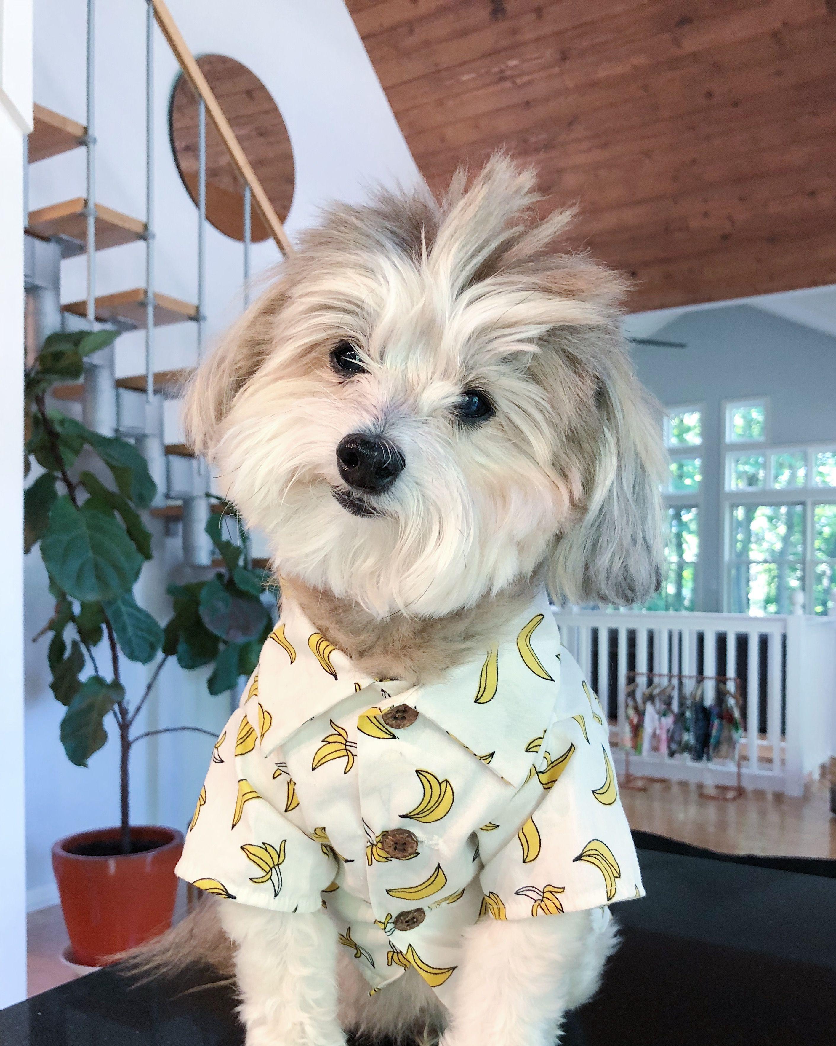 Mama/' Boy Cute Dog Shirts Clothes Dog Tops for Dogs Dog Apparel Dog Shirts