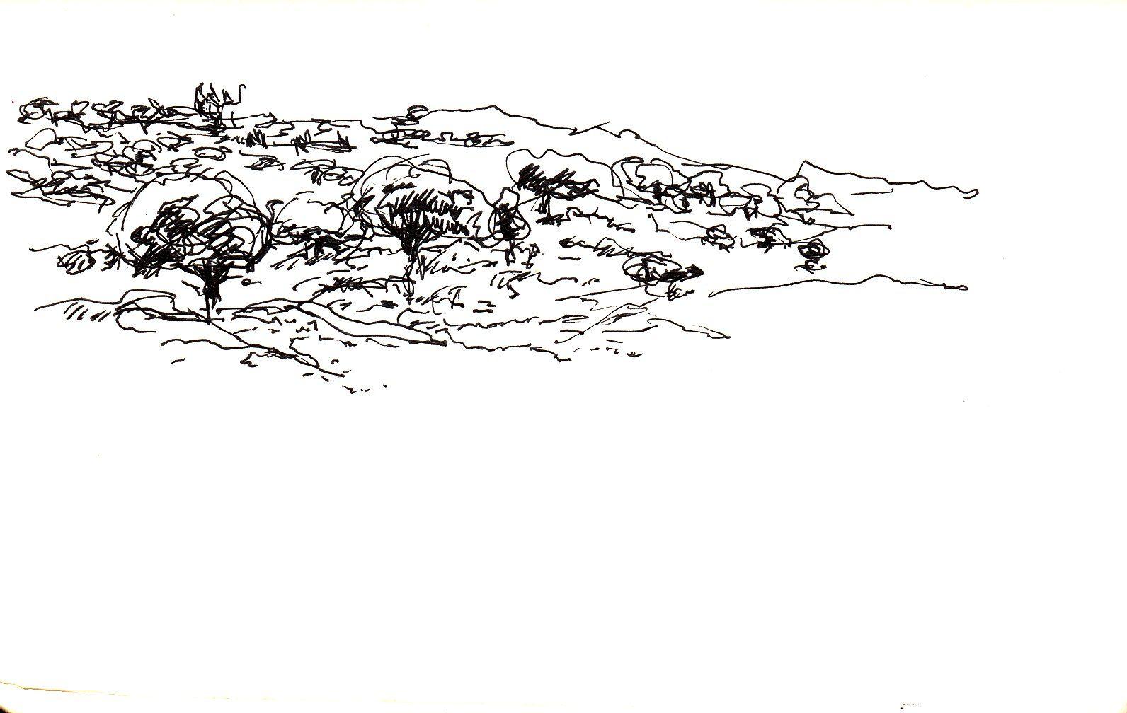 Campo De Caceres Dibujo A Boligrafo Y Tinta 14 X 9 Cms