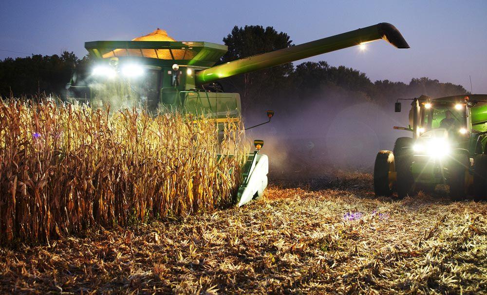 Harvesting Corn At Dusk