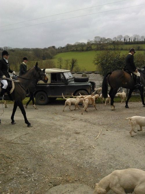 Ponies, dogs and Defenders  what more could you want?