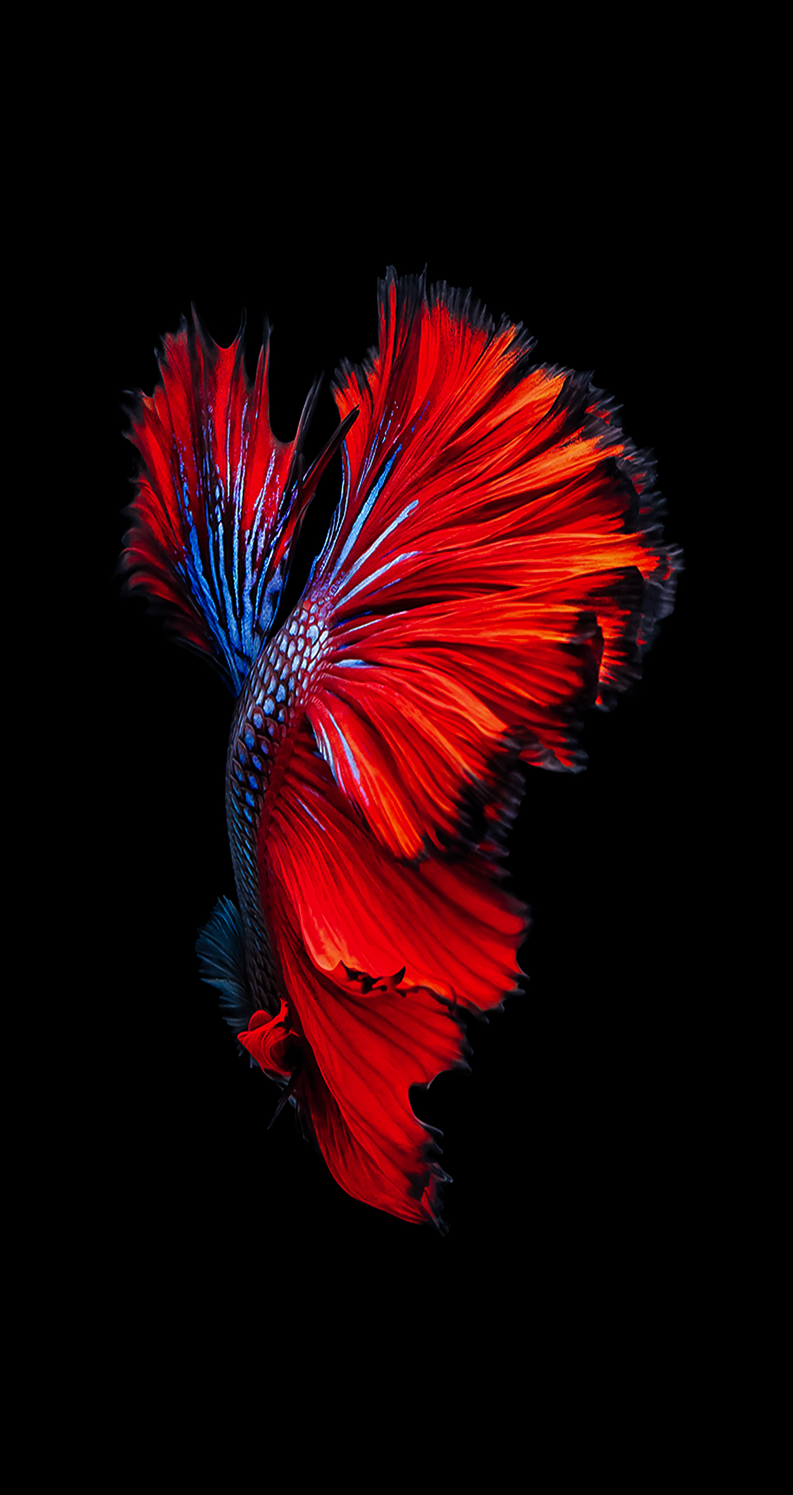 Related image Iphone wallpaper ios, Fish wallpaper