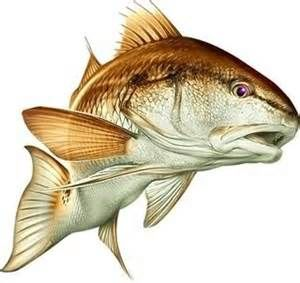 bull redfish clip art bing images pictures pinterest rh pinterest ph Redfish Tail Clip Art Redfish Tail Clip Art
