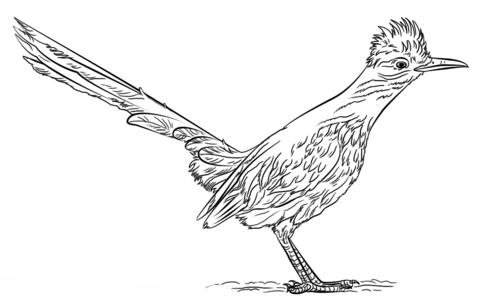 Correcaminos grande Dibujo para colorear | pájaros y aves ...