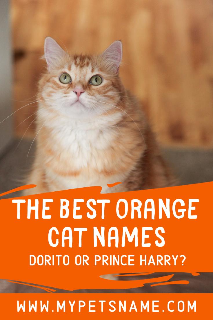 Best Orange Cat Names Cat Names Orange Cat Cool Pet Names
