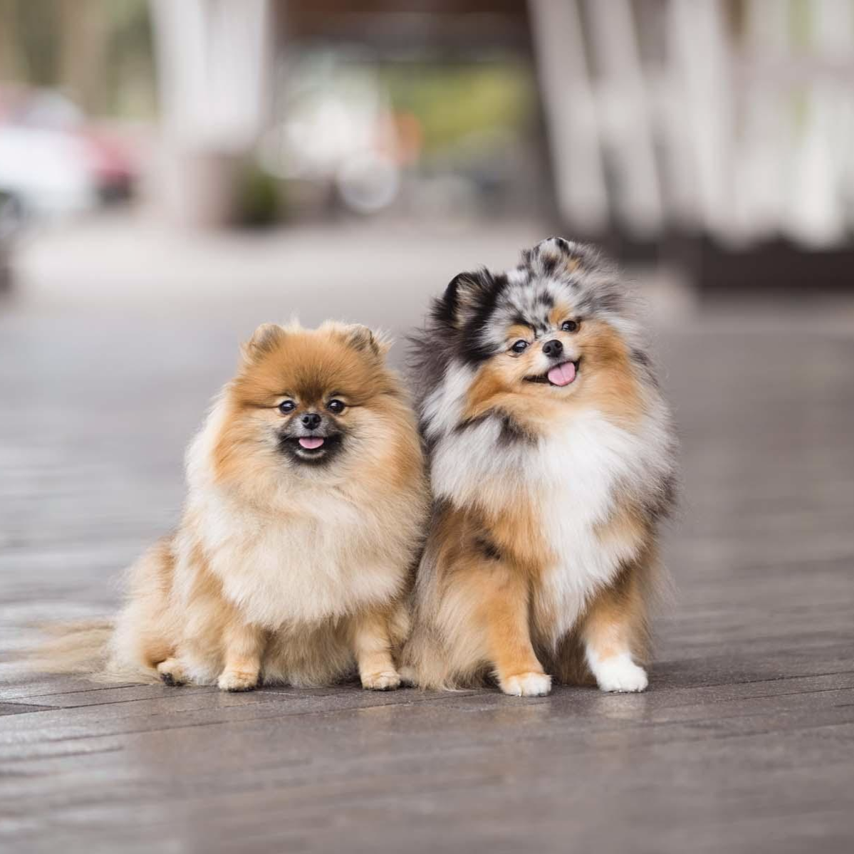 Nutrition Affects A Dog S Skin And Coat Especially In Dogs With Allergies Or Sensitive Skin Learn Who To Nouri Cute Dogs And Puppies Puppies Pomeranian Puppy